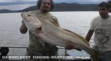 Huge Jewfish from the Hawkesbury River Sydney