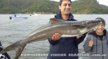 15kg Cobia caught in the Hawkesbury River
