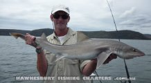Gummy Shark from the Hawkesbury River Sydney
