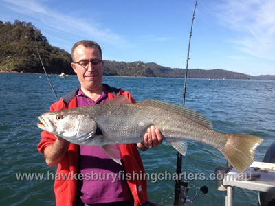 Jewfish Hawkesbury Fishing Charters